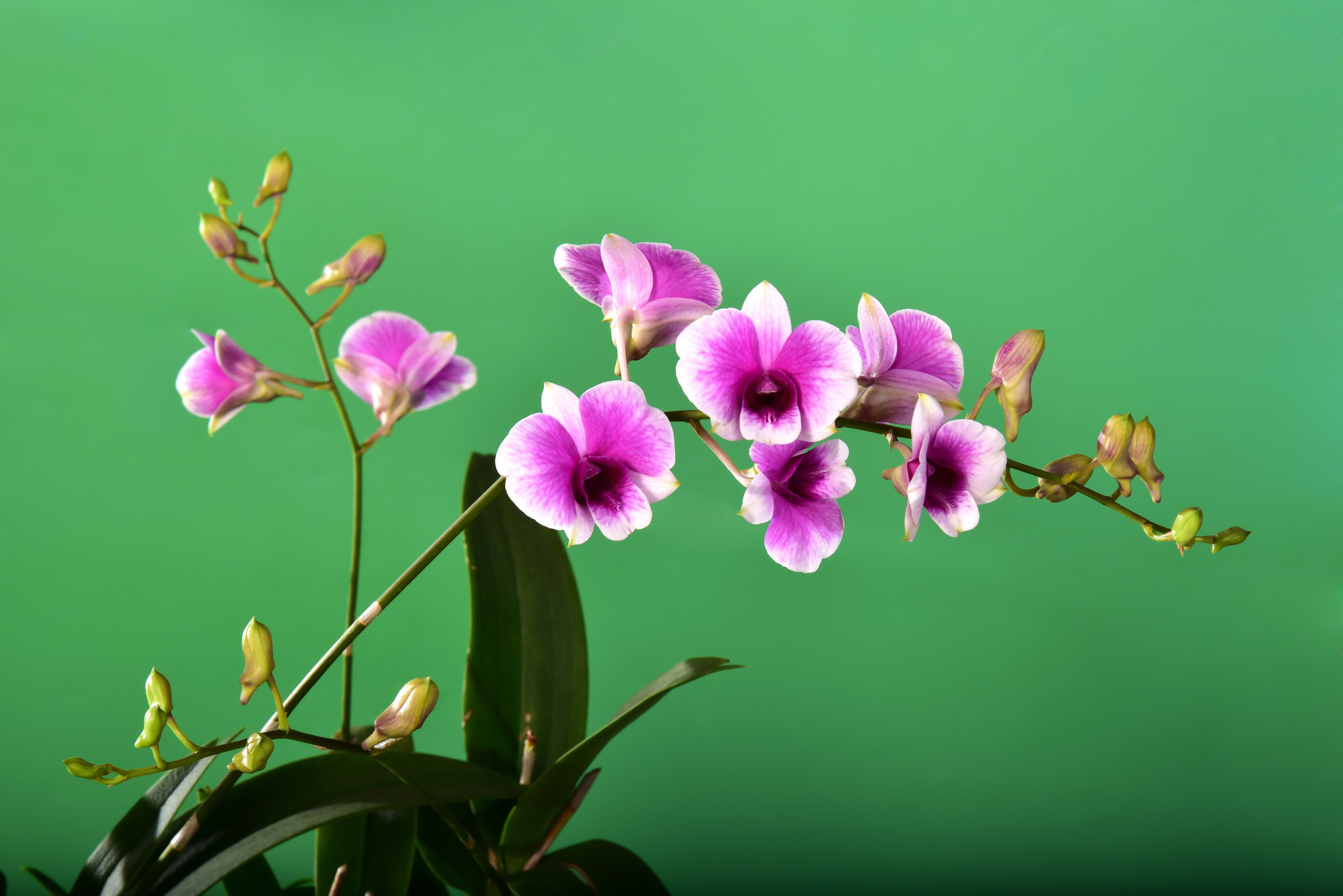 Orchid bouquet with a beautiful bokeh 72 DPI