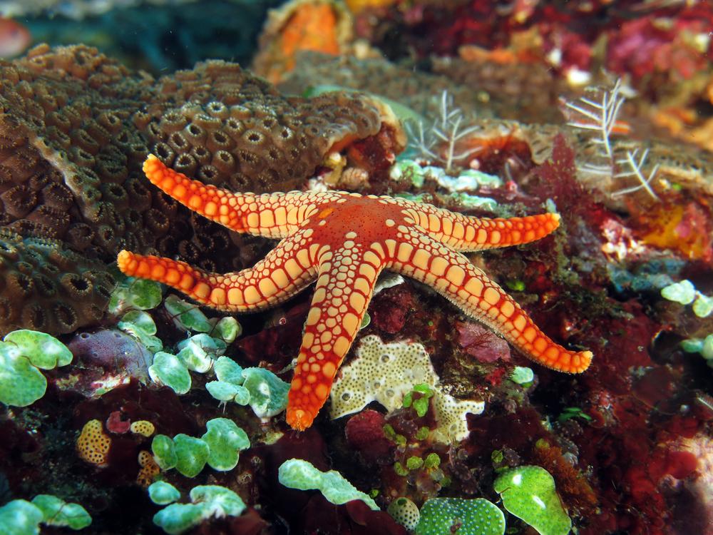 حصى ونجم البحر الأحمر في قاع البحر المملوء بالألوان