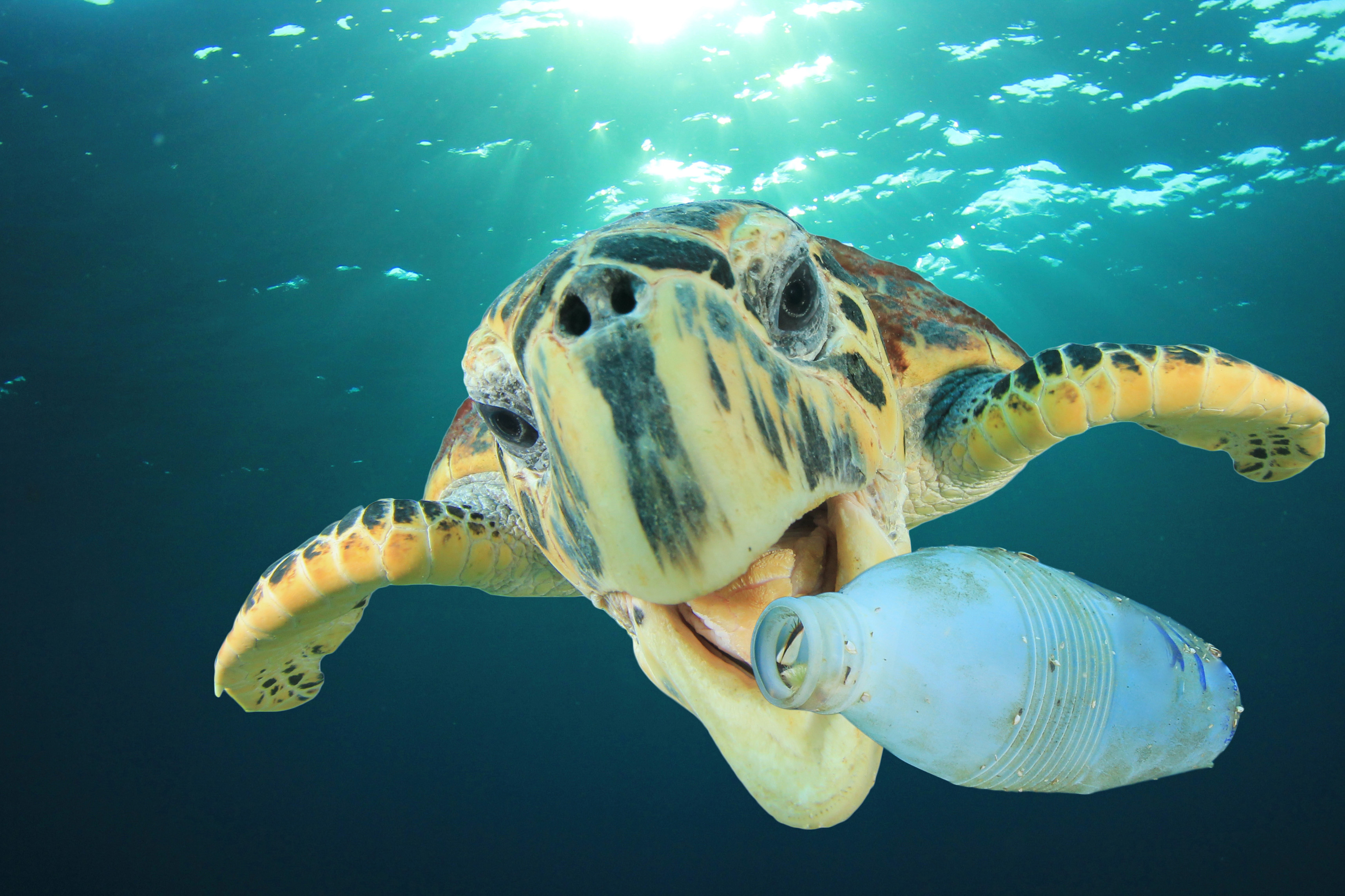 Plastic pollution problem in the sea-Turtle