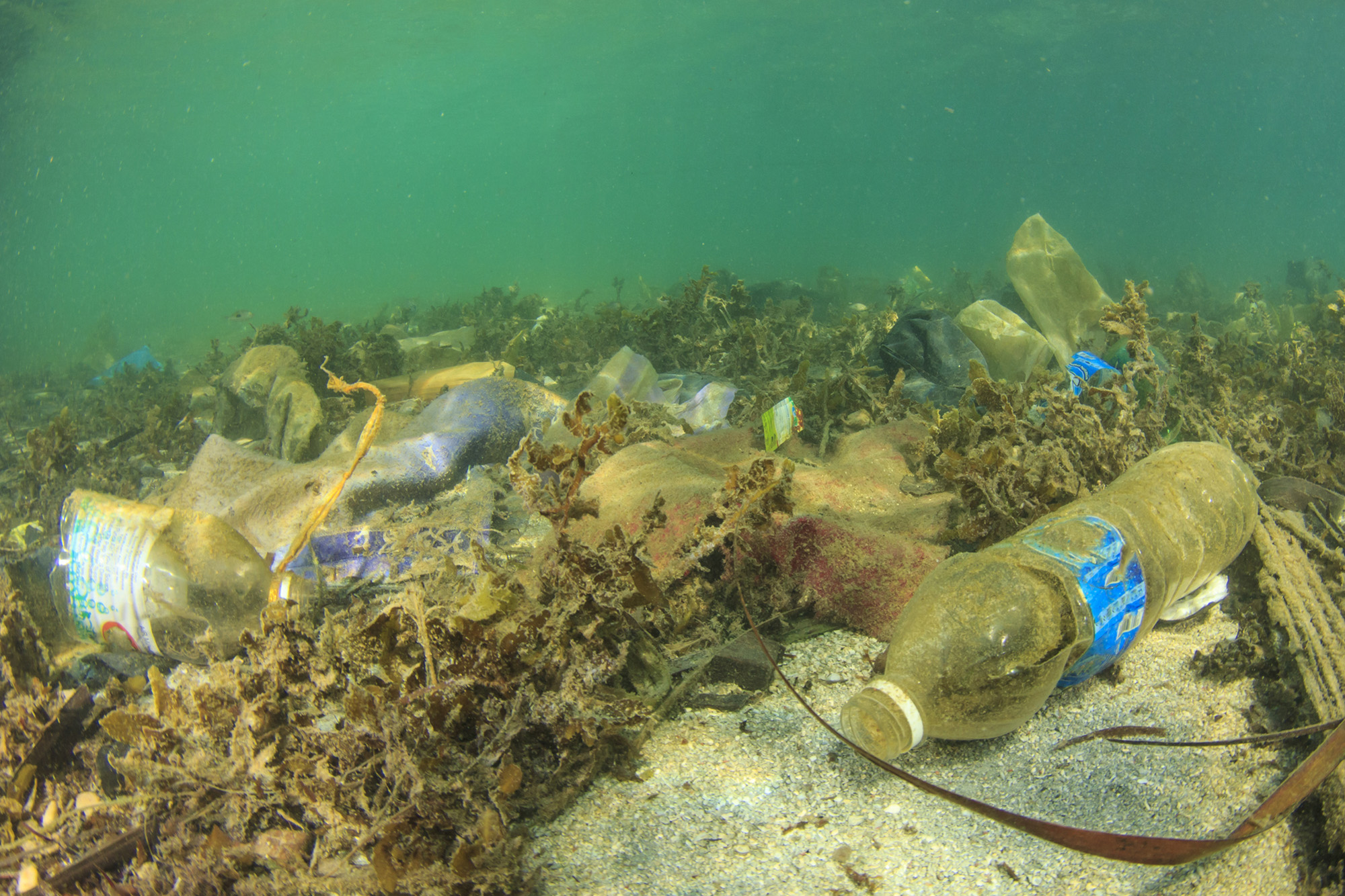 Pollution on sea-72 ppi