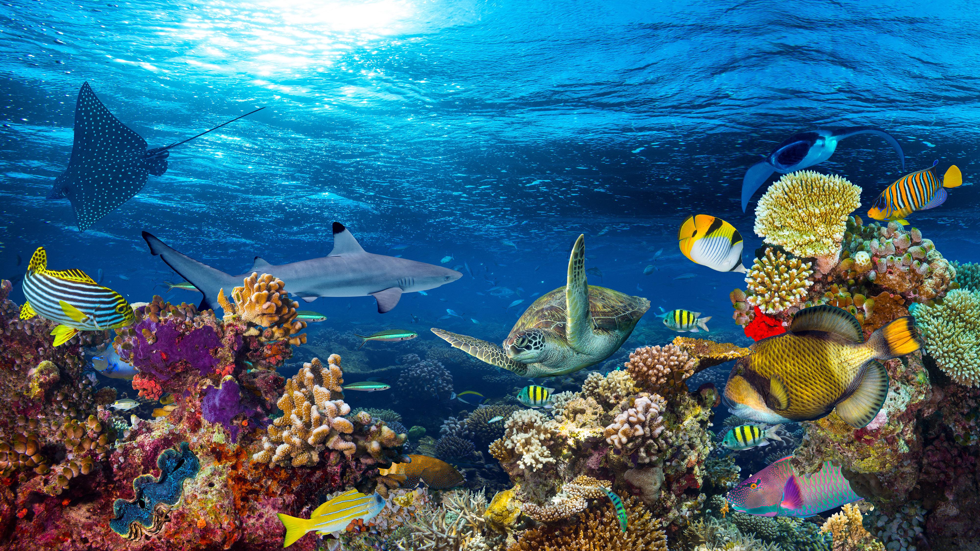 paisagem de recife de coral subaquático1-editado