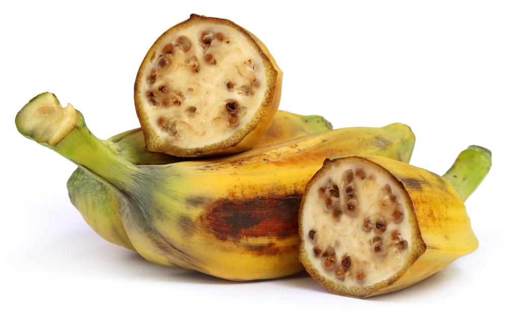 Musa balbisiana, A wild banana of Southeast Asia