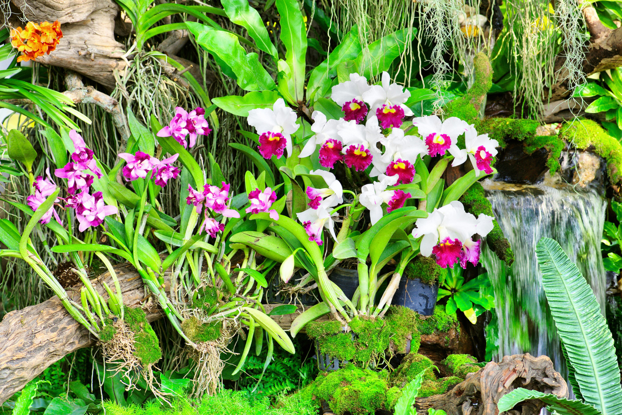 Orchid garden-Cropped