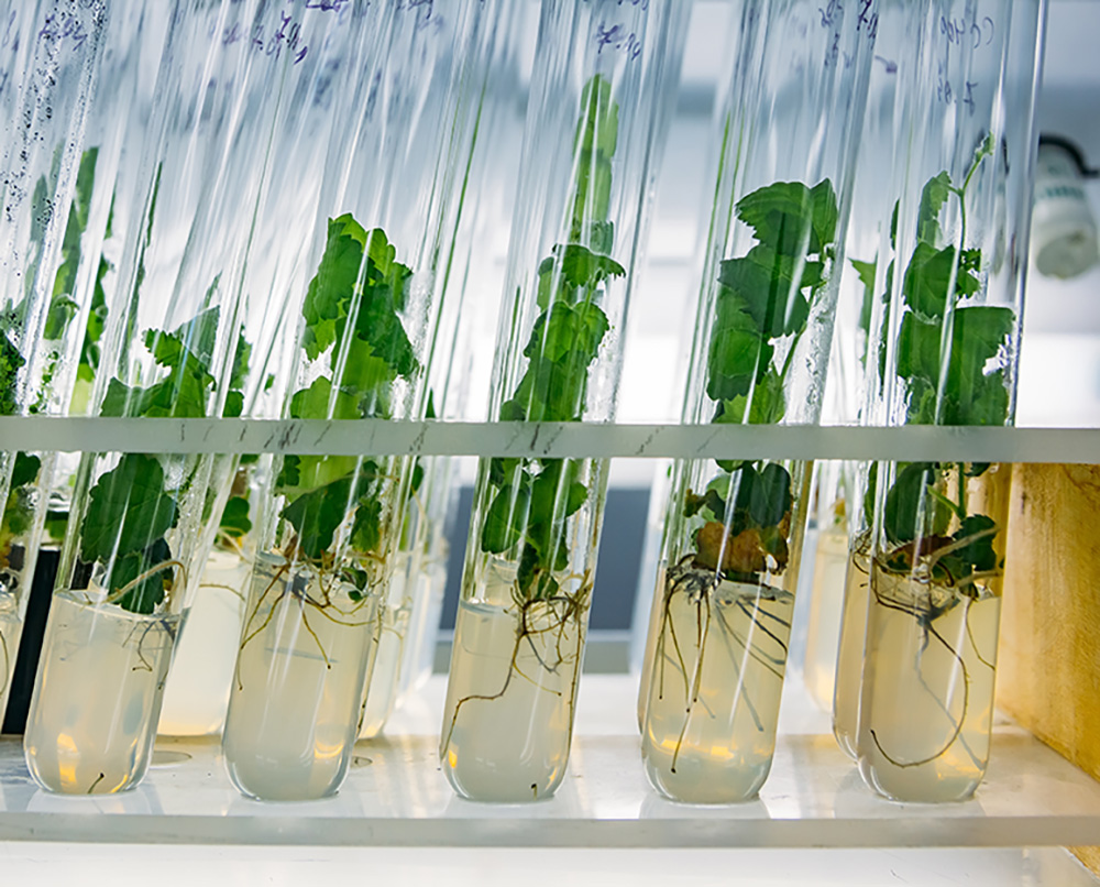 Cloned decorative micro plants in test tubes