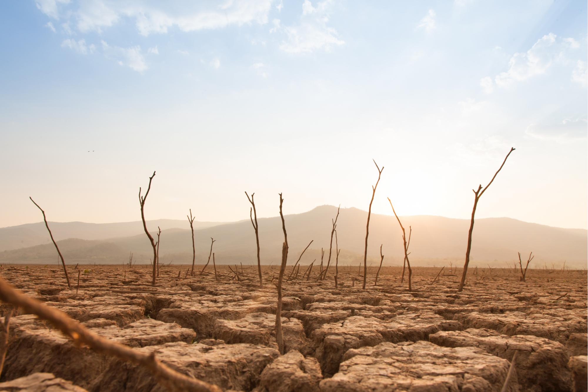 Árvores mortas na seca e terra rachada