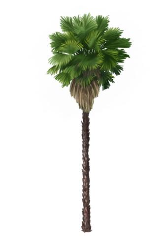 Watercolor Sketch of a Fan Palm Tree