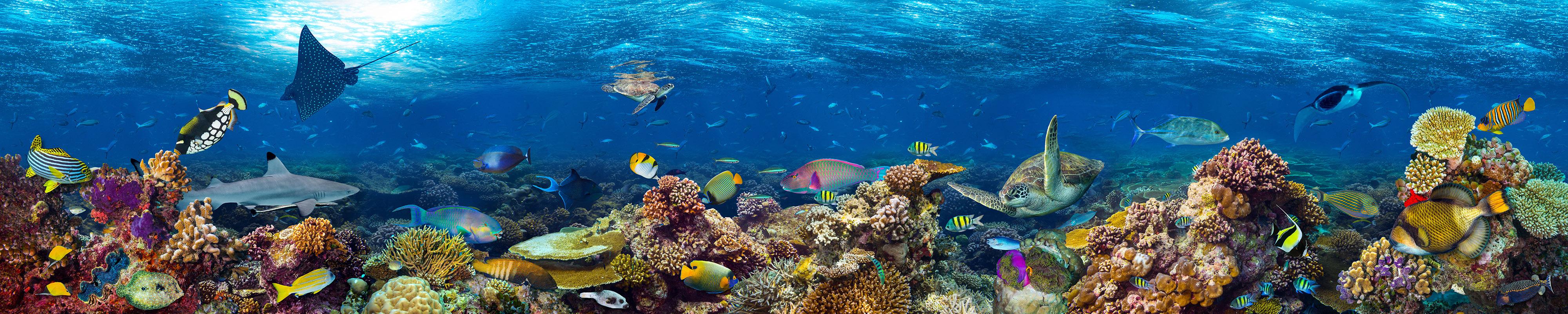 paisagem de recife de coral subaquático2-editado