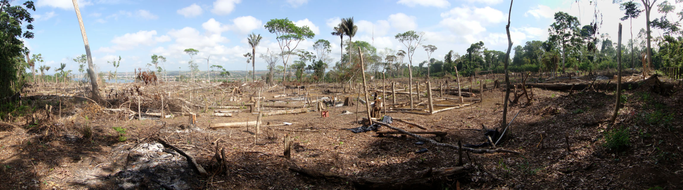 Area of illegal deforestation-72 ppi