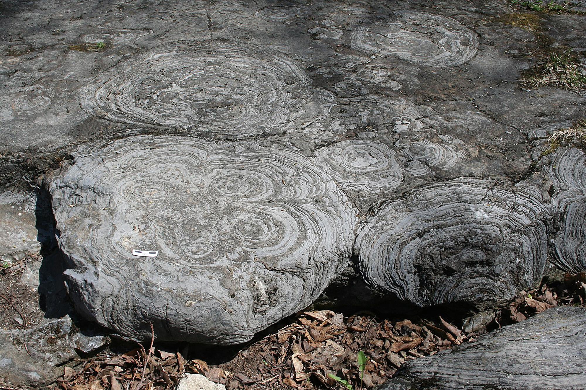 أحفورات ستروماتوليت