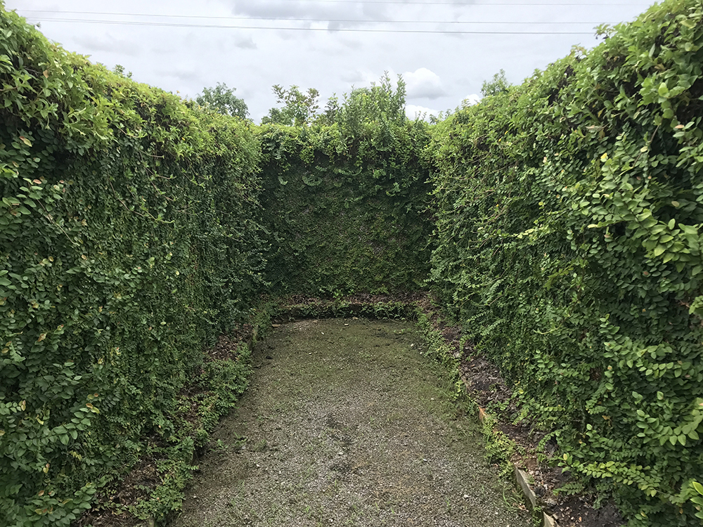 Vine plant wall on dead end in maze