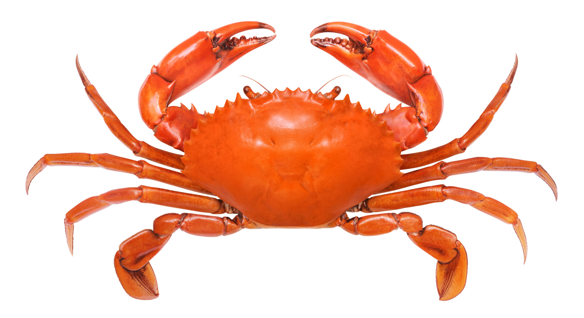 Crab-72 ppi
