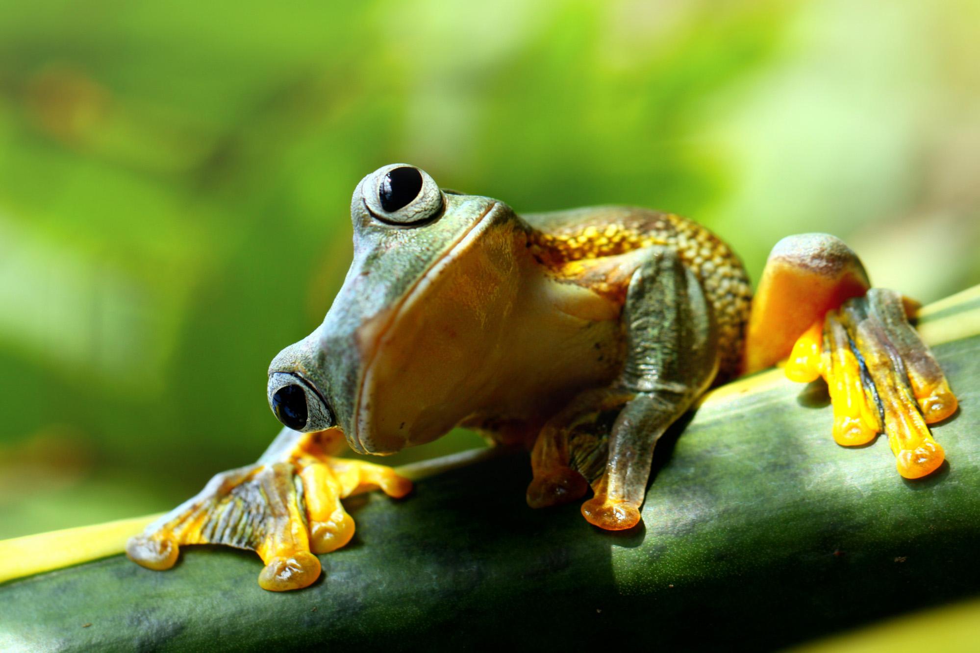 Frog-72 ppi