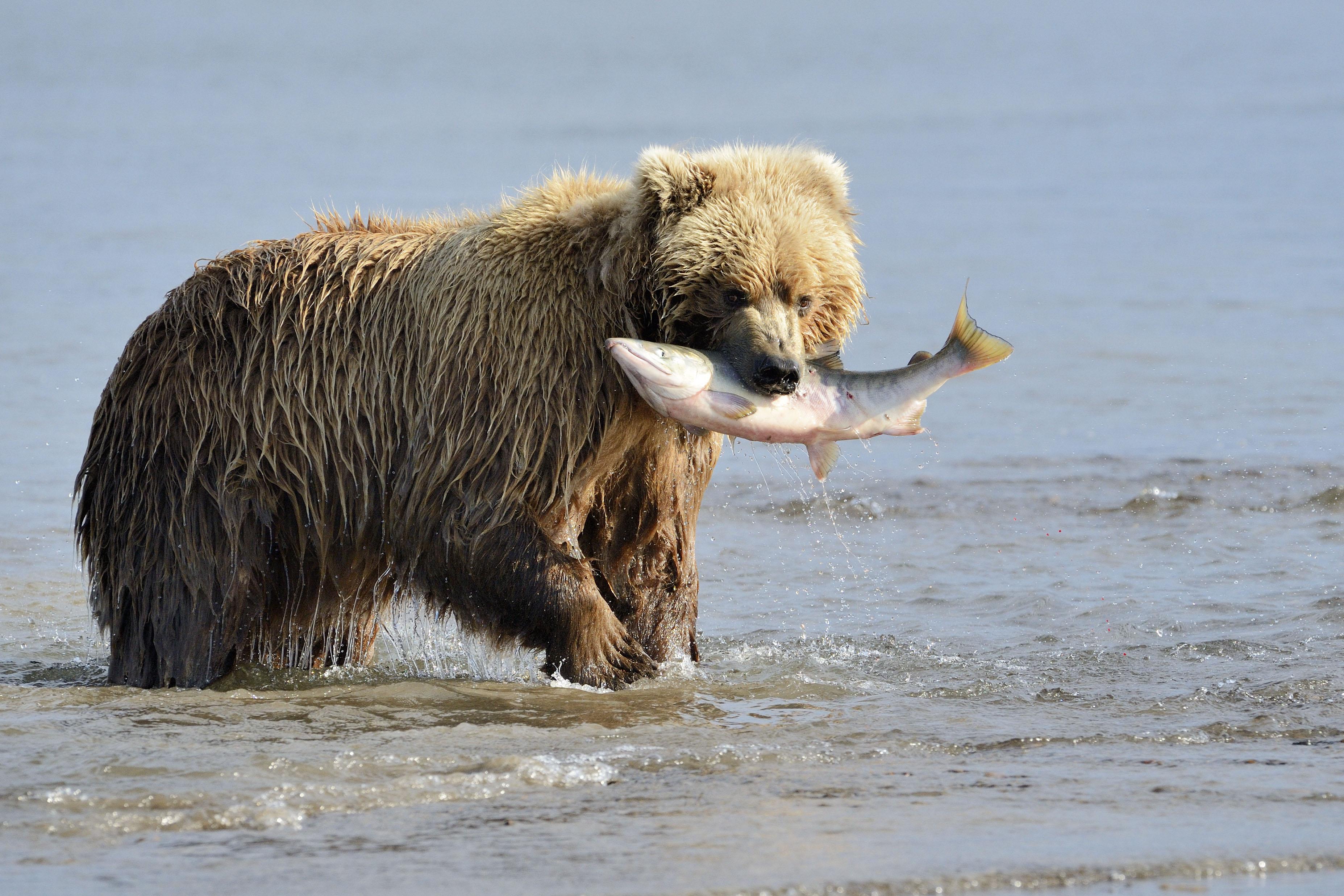 urso-pardo1-editado