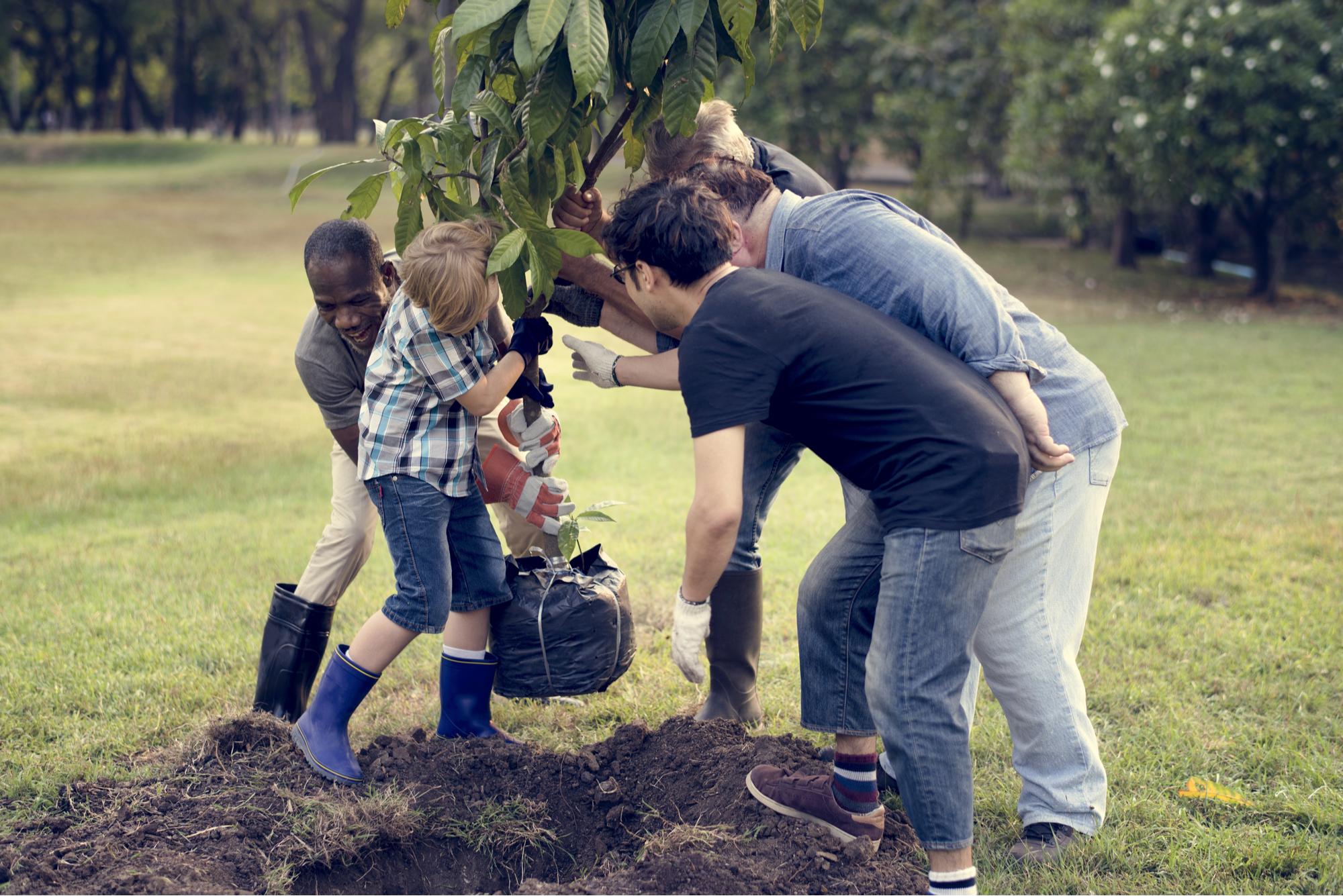 Grupo de diversas pessoas plantando árvores juntos