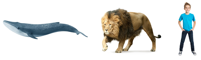 Homem - baleia - menino - mamíferos
