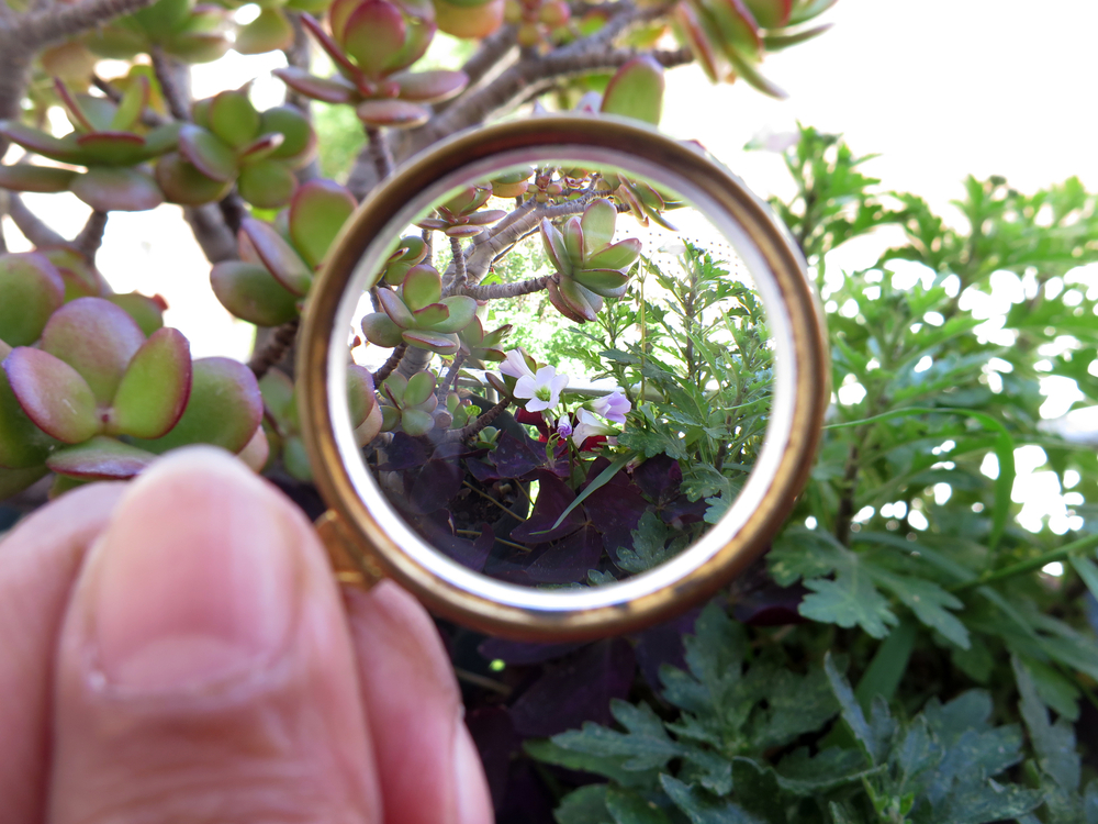 View of a plant through a concave hand lens