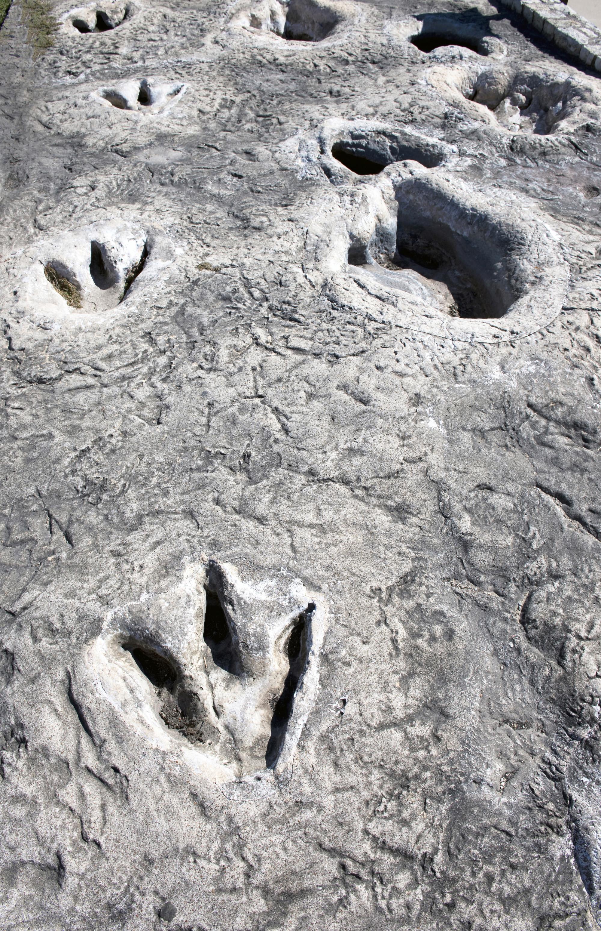 Dinosaur Valley-72 ppi