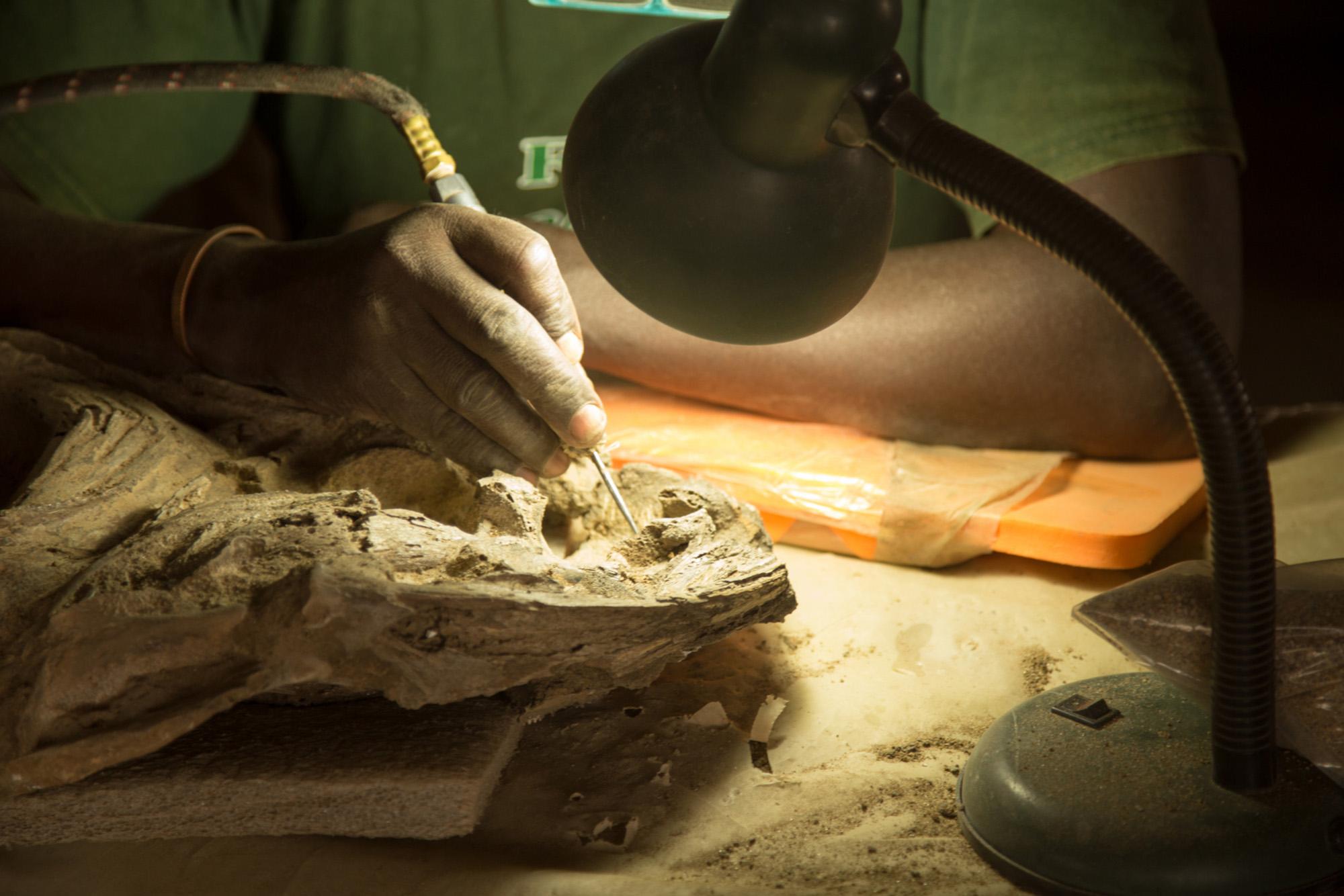 عالِم حفريات قديمة أفريقي