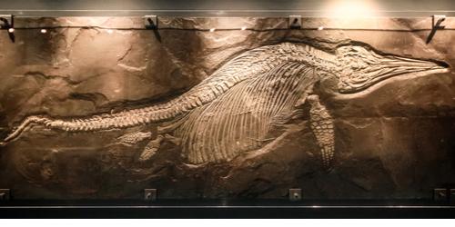 Fóssil de ictiossauro