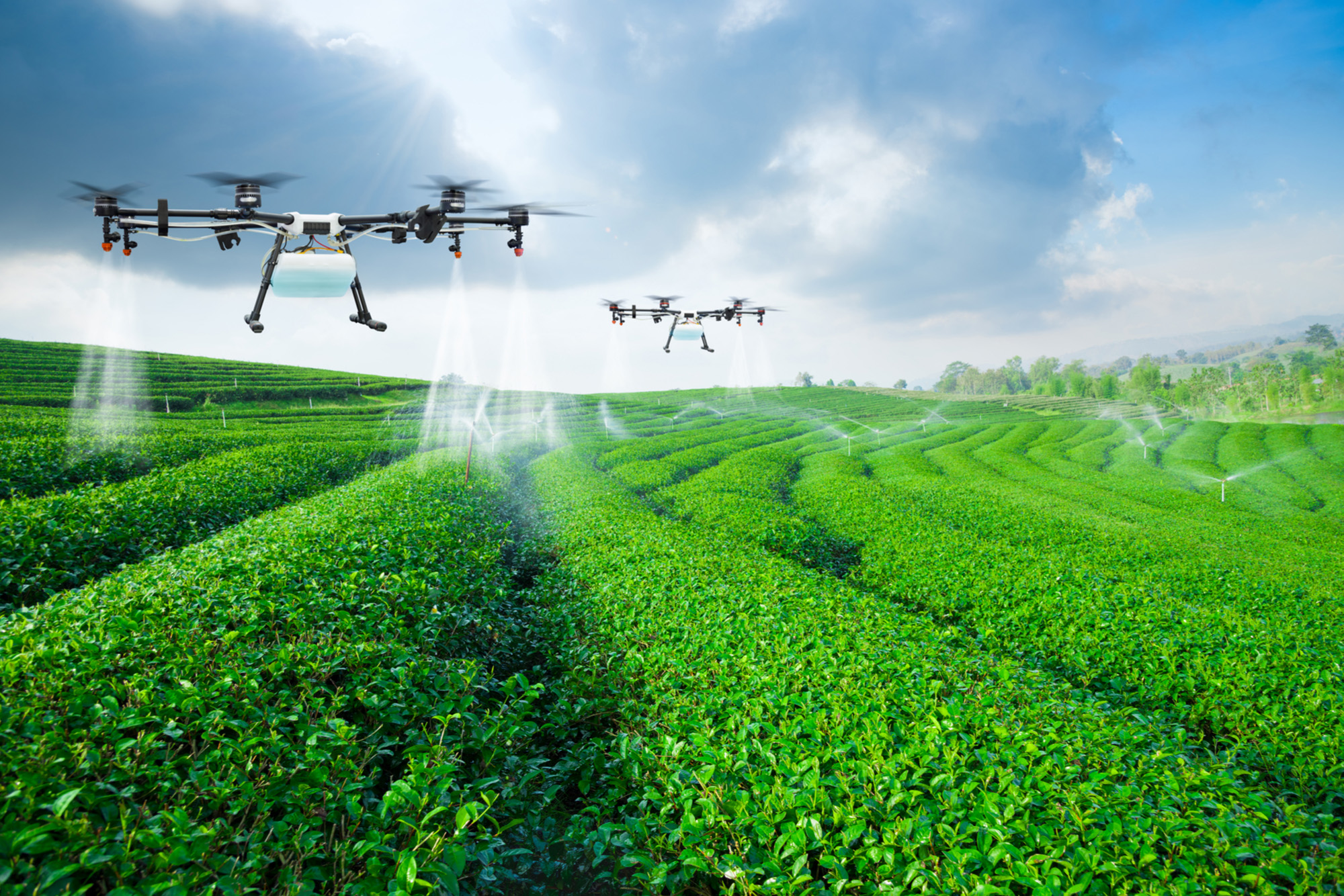 Agriculture drone fly to sprayed fertilizer on the green tea fields-72 ppi