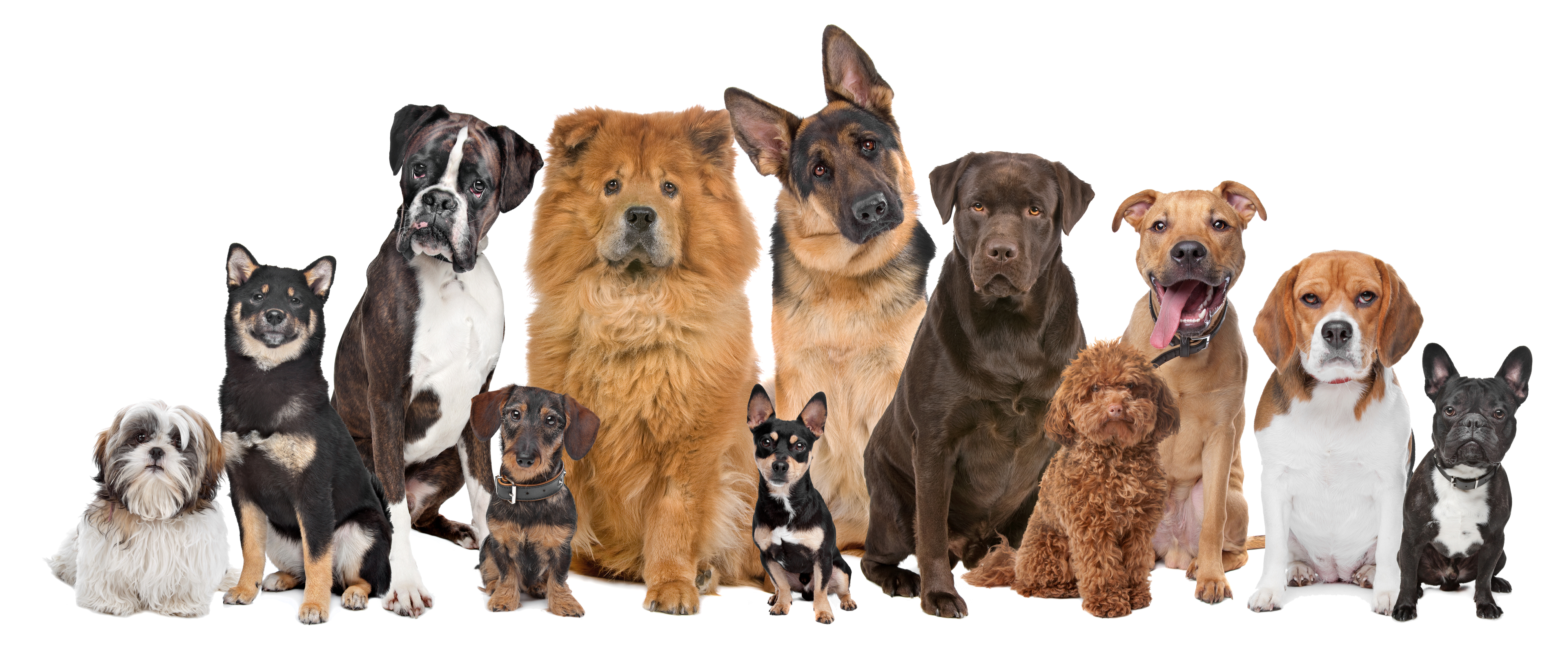 Dogs-group-obedience-ancestors-72ppi